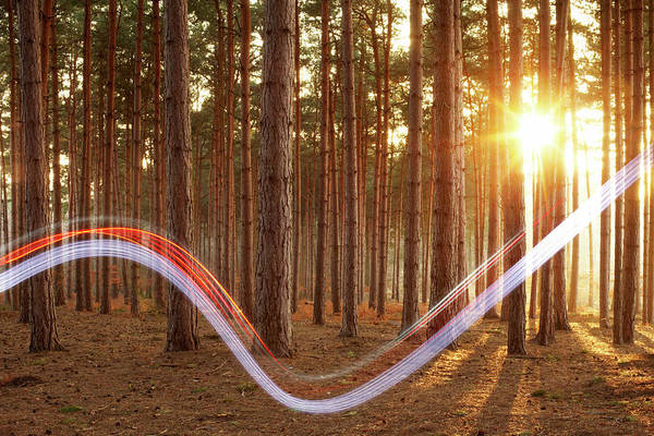 Motion Photograph - Light Swoosh In Woods by Tim Robberts