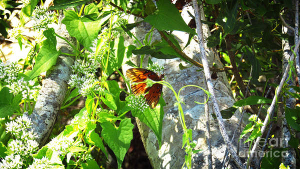 Photograph - Light The Butterfly by Robert Knight
