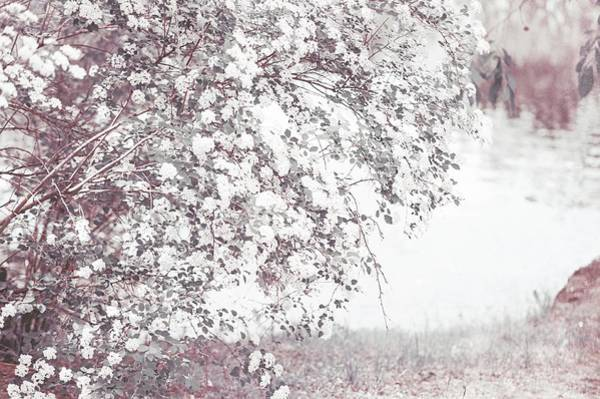 Photograph - Light Vintage Spring  by Jenny Rainbow