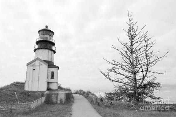 Photograph - Lighthouse And Tree Lean In Bw by Carol Groenen