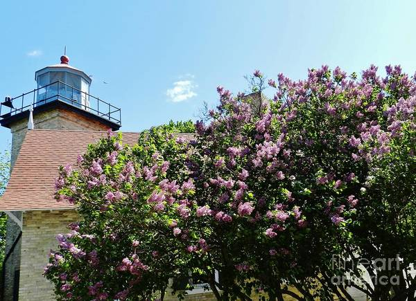 Wall Art - Photograph - Lighthouse Lilacs by Snapshot Studio