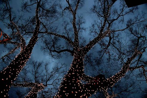 Celebration Photograph - Lightings On Zelkova Tree by Jun Okada