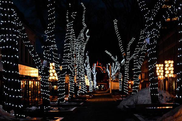 Photograph - Lights Among The Tress by Christina Maiorano