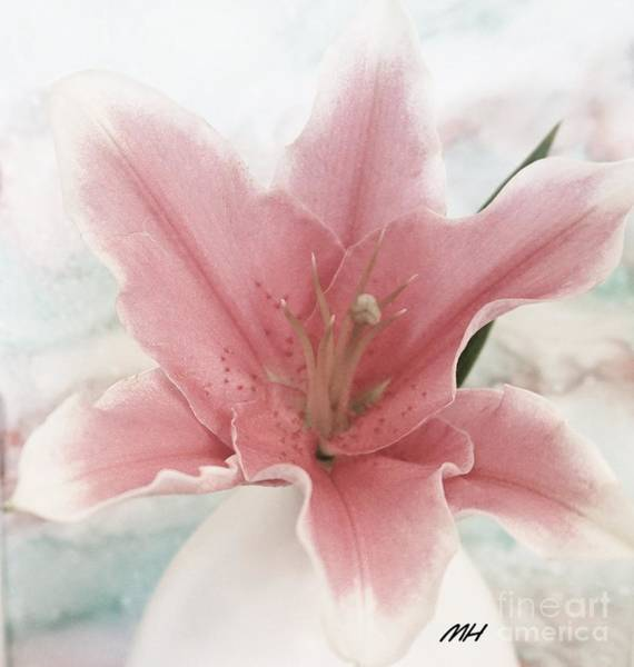 Wall Art - Photograph - Lil Lily by Marsha Heiken