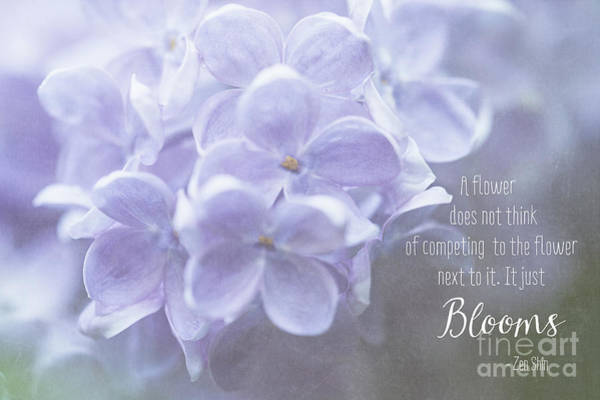 Photograph - Lilac Blooms With Quote by Anita Pollak