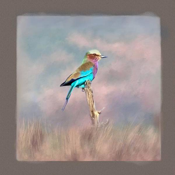 Photograph - Lilac-breasted Roller by Donna Kennedy
