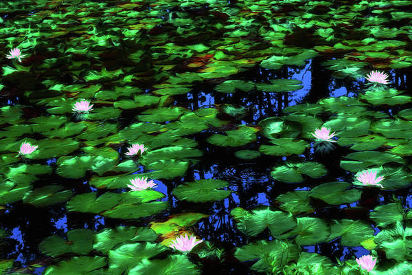 Wall Art - Digital Art - Lilies Aglow by Dan Carmichael