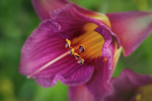 Photograph - Lilies by Allin Sorenson