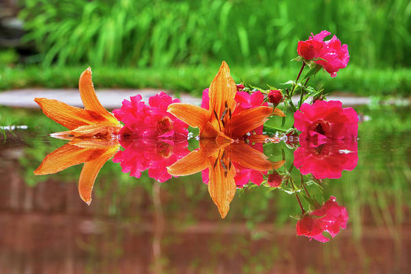 Lilies And Roses Reflection Art Print