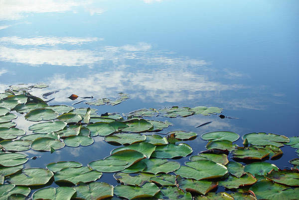 Wall Art - Photograph - Lilies In Pond With Sky Reflection by Jaminwell