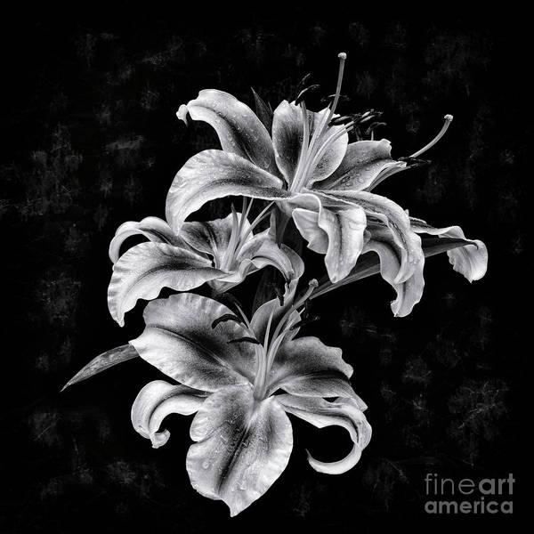 Wall Art - Photograph - Lilies by Masako Metz