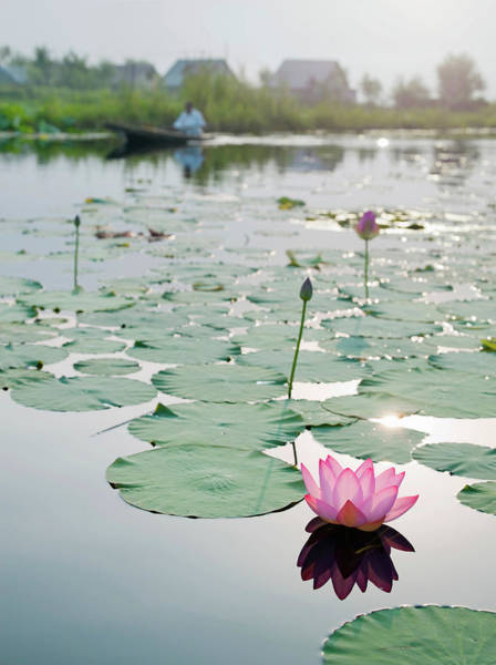 Wall Art - Photograph - Lilly And Lilly Pads On Lake Dal by Cultura Rf/philip Lee Harvey