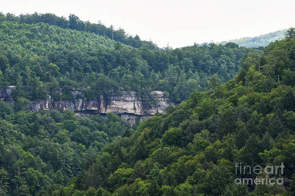Photograph - Lilly Bluff Trail 1 by Phil Perkins
