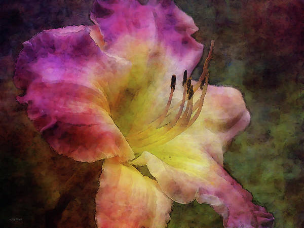 Photograph - Lily 4298 Idp_2 by Steven Ward