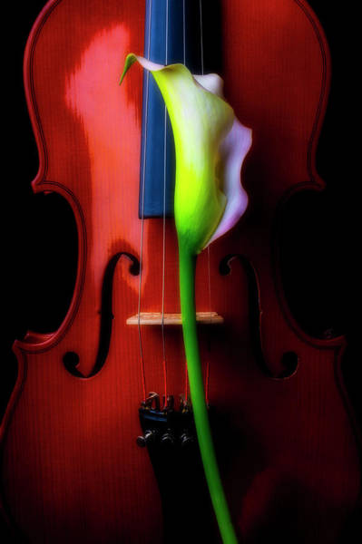 Wall Art - Photograph - Lily And Violin by Garry Gay