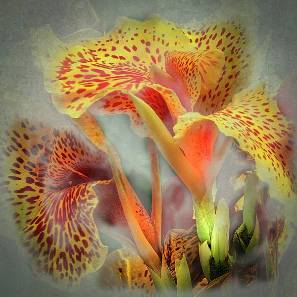 Photograph - Lily In The Fog by Barry Weiss