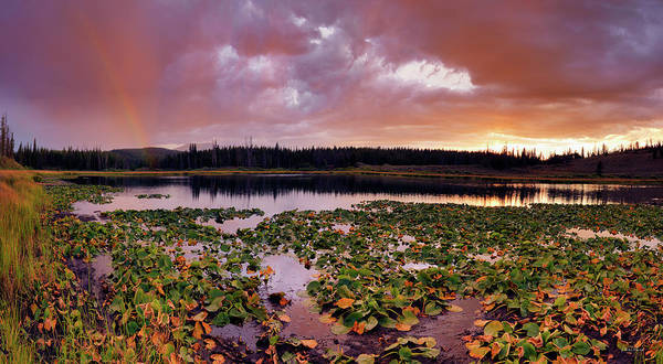 Photograph - Lily Lake by Leland D Howard