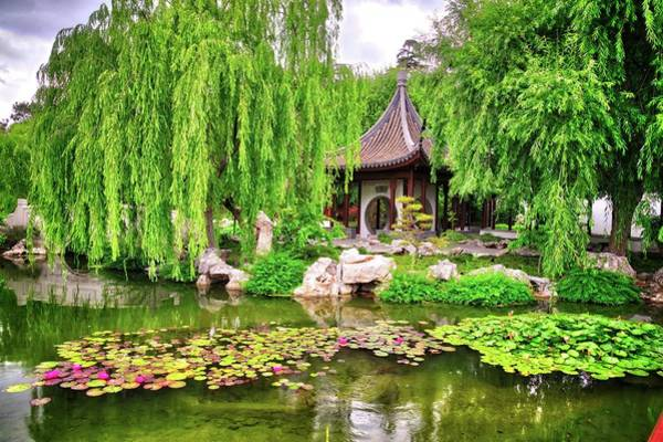 Photograph - Lily Pad Beauty In The Chinese Garden by Lynn Bauer