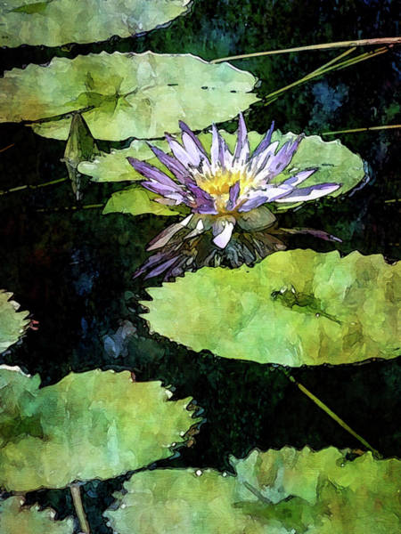 Photograph - Lily Pads And Purple Lotus 2981 Idp_2 by Steven Ward