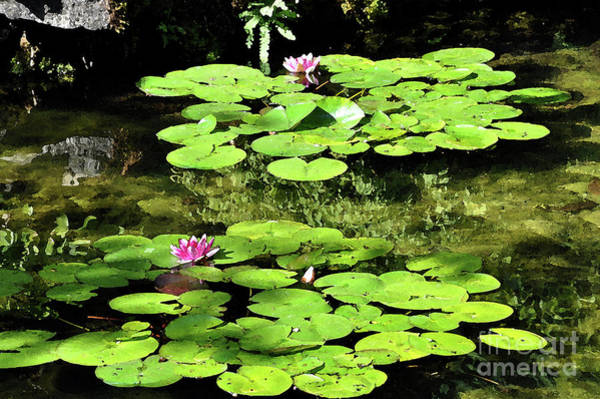 Digital Art - Lily Pads by Kirt Tisdale