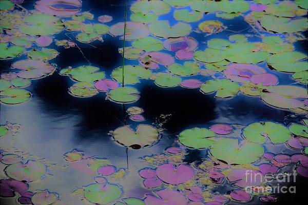 Photograph - Lily Pads2 by Merle Grenz