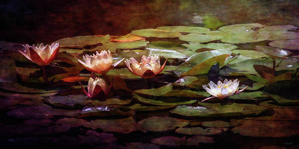 Photograph - Lily Pond 1820 Idp_2 by Steven Ward