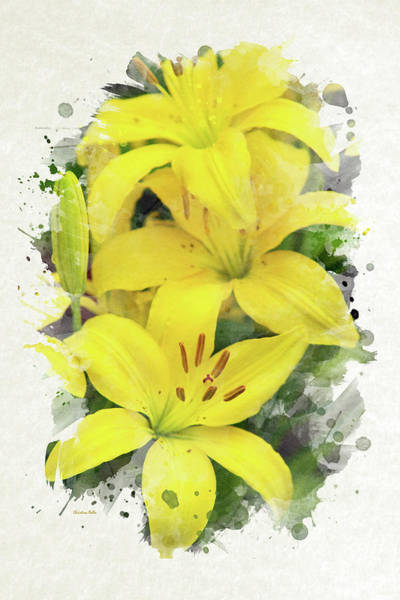 Mixed Media - Lily Watercolor Art by Christina Rollo