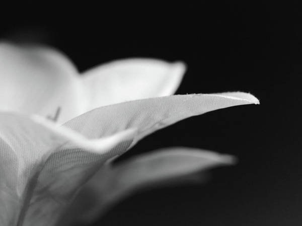 Oneness Photograph - Lily...in Flight by Tom Druin