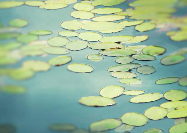 Treen Photograph - Lilypads by Allison Trentelman