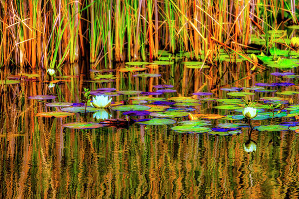 Gay Photograph - Lilypond Reflections by Garry Gay