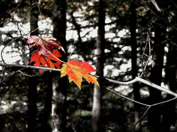 Photograph - Lincoln Woods Leaves by Wayne King