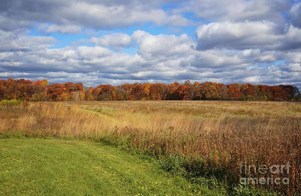 Photograph - Line Of Autumnal Grace by Rachel Cohen