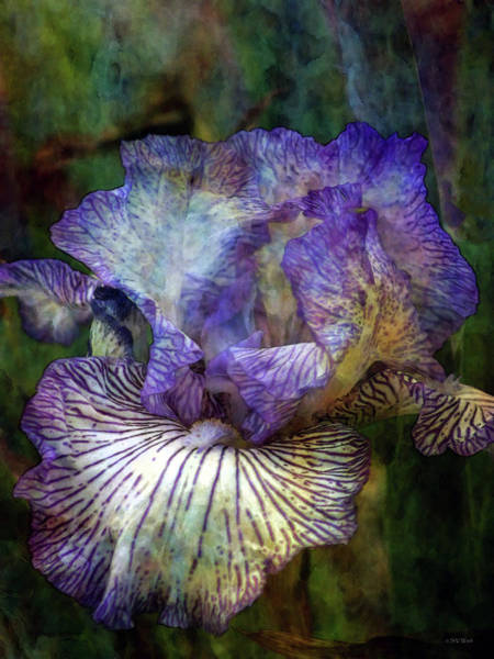 Photograph - Lined Iris 0255 Idp_2 by Steven Ward