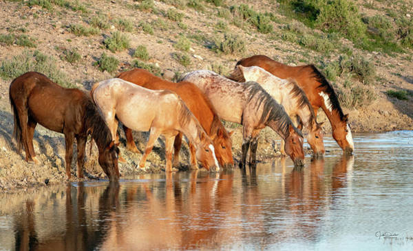 Photograph - Lineup At The Pond-- Wild Horses by Judi Dressler