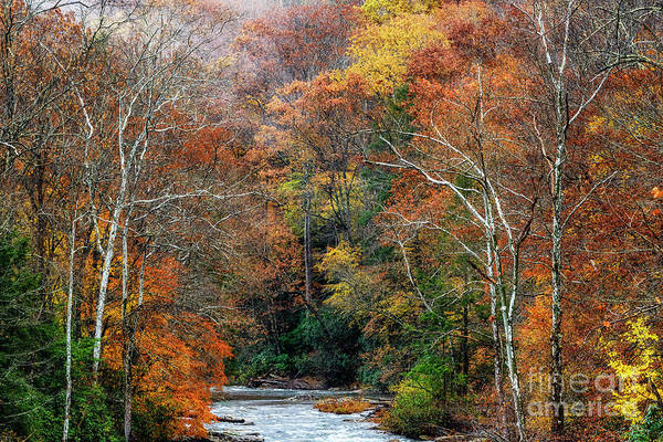 Photograph - Lingering Fall Color by Thomas R Fletcher