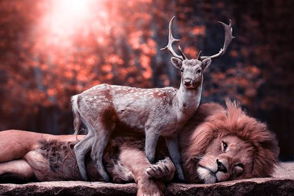 Photograph - Lion And Reindeer by Top Wallpapers