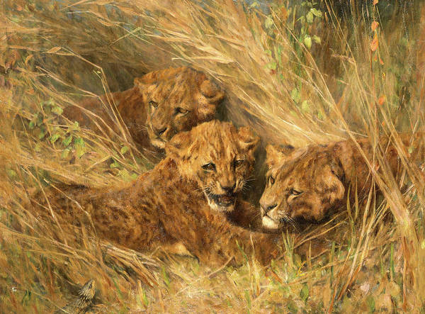Wall Art - Painting - Lion Cubs by Arthur Wardle