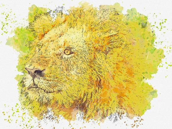 Painting - Lion Kign -  Watercolor By Ahmet Asar by Ahmet Asar