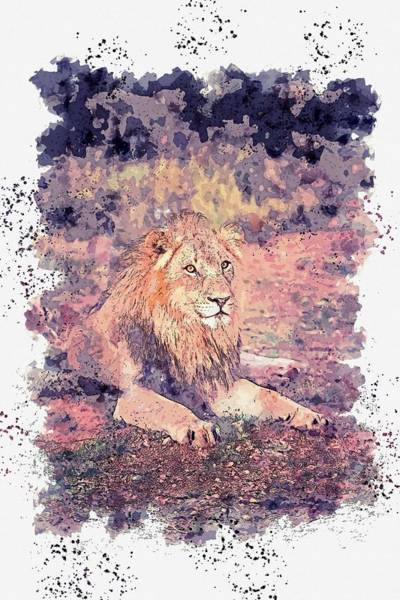 Painting - Lion Lying On Ground -  Watercolor By Ahmet Asar by Ahmet Asar