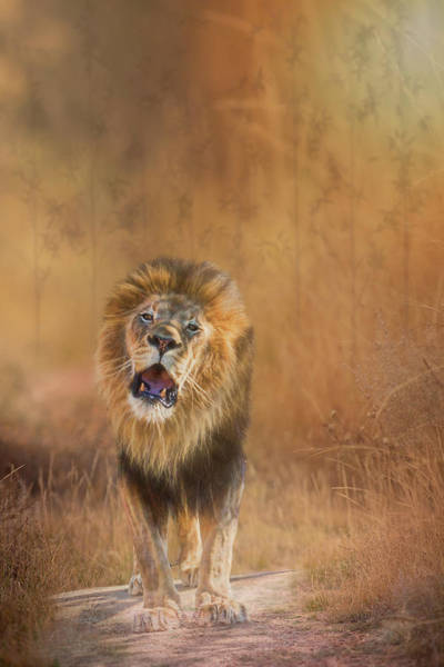 Photograph - Lion Roar by Patti Deters