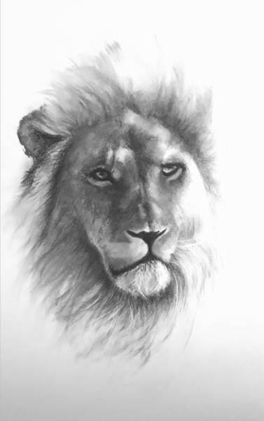 Wall Art - Drawing - Lion by Sue Tatham