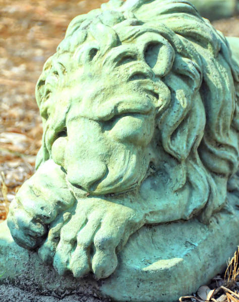 Photograph - Lionhearted by JAMART Photography