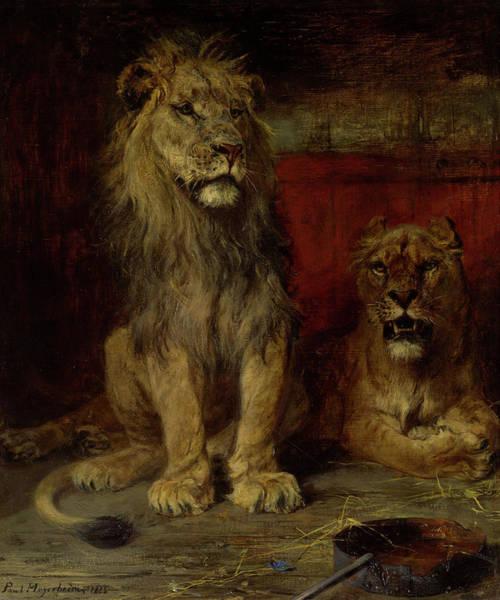 Wall Art - Painting - Lions, 1885 by Paul Friedrich Meyerheim
