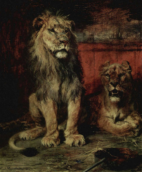 Painting - Lions by Paul Friedrich Meyerheim