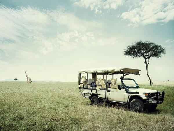 Off-road Vehicles Photograph - Lions Revenge by Simon Winnall