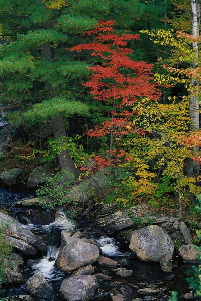 New England Autumn Photograph - Liqas092 Fall Scenic, Acadia Np, Maine by Elizabeth Delaney