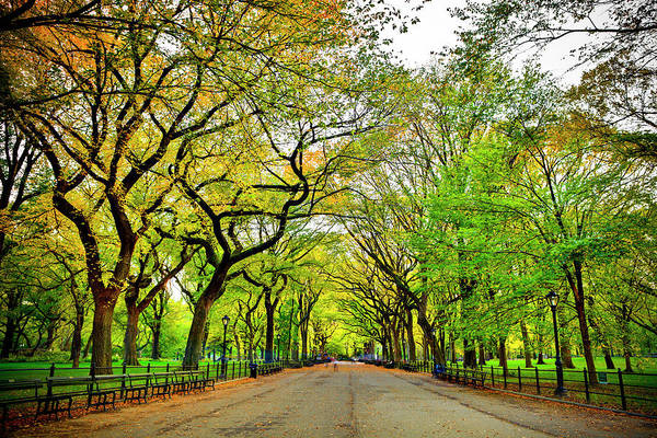Mall Photograph - Literary Walk In Central Park At Fall by Espiegle