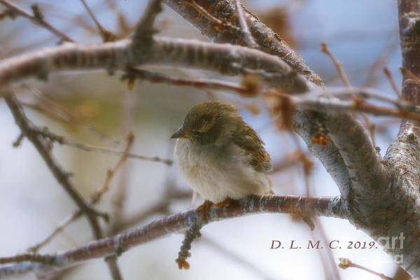 Photograph - Little Bird Near by Donna L Munro