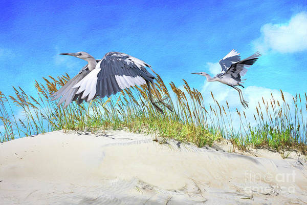 Wall Art - Photograph - Little Blue Herons by Laura D Young