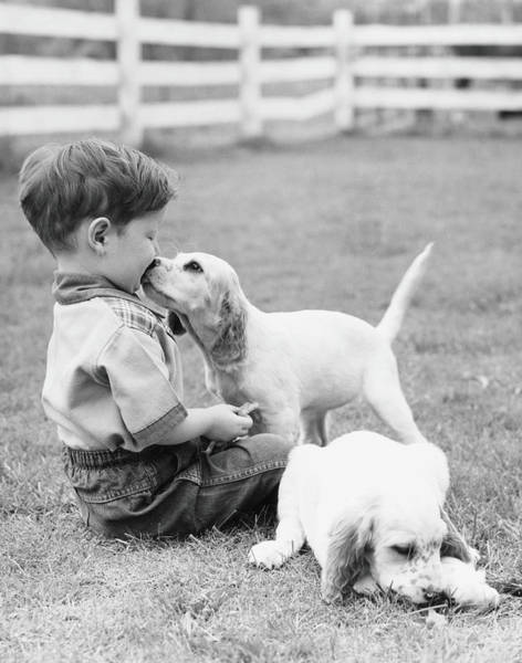White Dog Photograph - Little Boy Sitting In Grass With One by H. Armstrong Roberts
